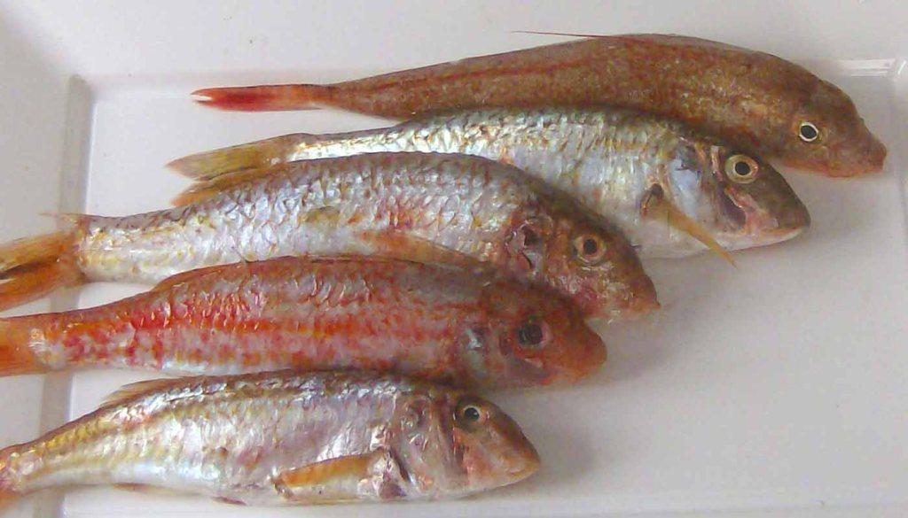 Consejos para conservar el pescado adecuadamente