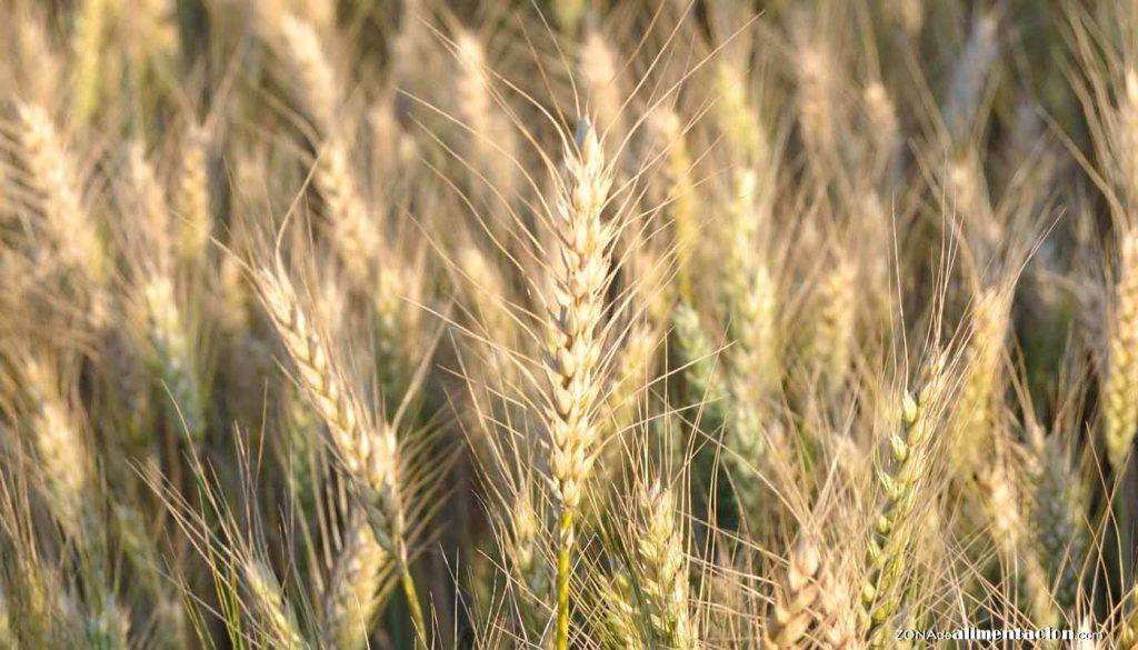 calorías, índice glucémico y valor nutritivo o nutricional y propiedades del trigo