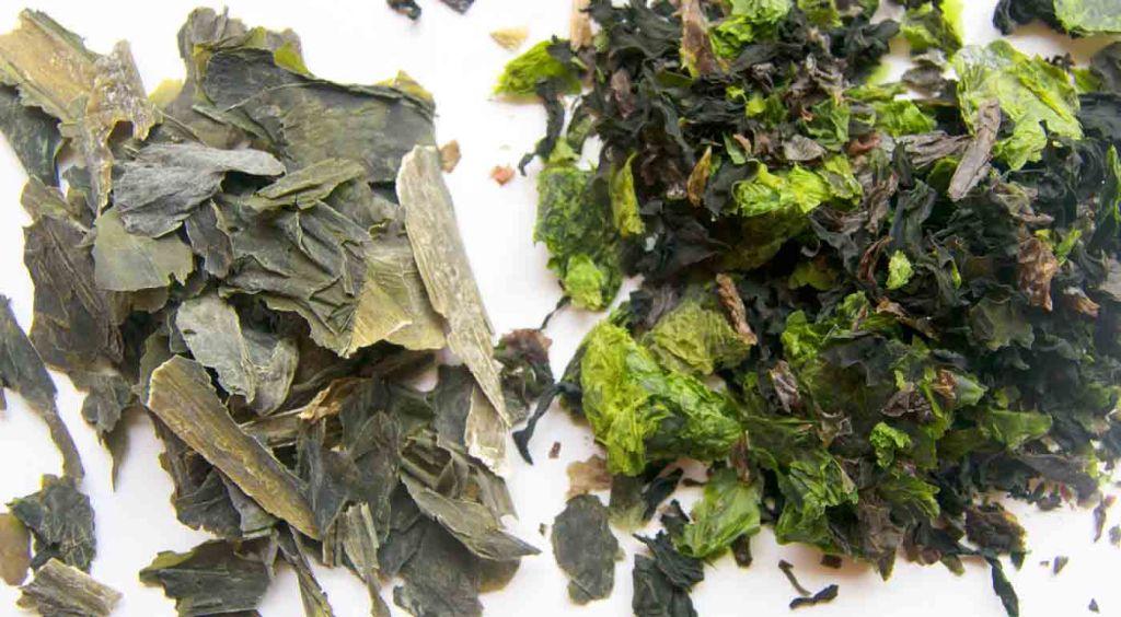 calorías, índice glucémico y valor nutritivo o nutricional y propiedades de las algas