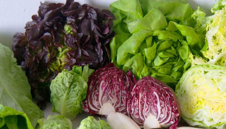 Seis variedades de lechugas para enriquecer tus ensaladas - valor nutritivo o nutricional y propiedades de las lechugas