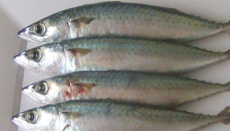 Cuántas raciones semanales de pescado azul y blanco hay que comer en una alimentación sana y equilibrada