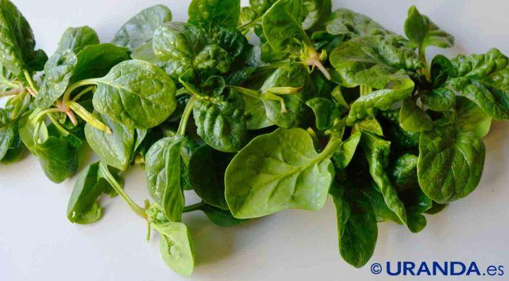 Diez alimentos para un vientre plano: espinacas