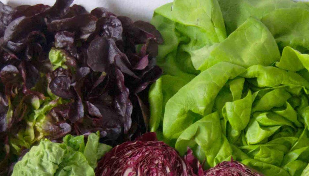 Lechugas: propiedades y valor nutritivo