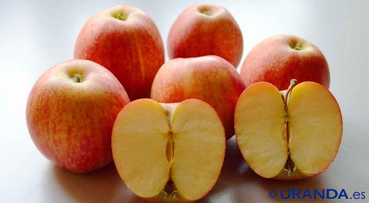 Calendario de frutas, verduras y hortalizas de temporada