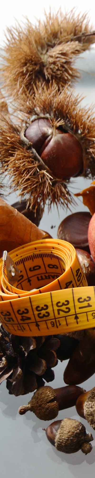 otoño: magazine de alimentaicion sana, dietas para adelgazar, salud, zona de alimentacion