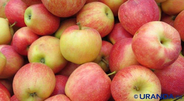 Diez alimentos para un vientre plano: espinacas - manzanas