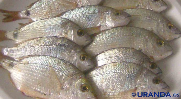 Cómo descongelar pescado al microondas - trucos de cocina