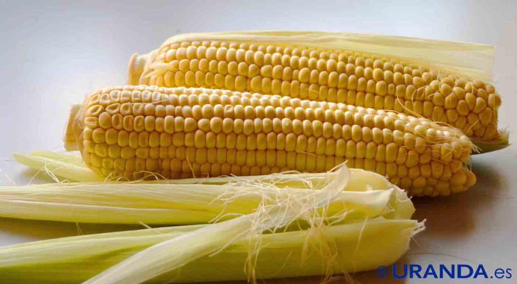 Maíz dulce o elote: calorías, índice glucémico y valor nutritivo